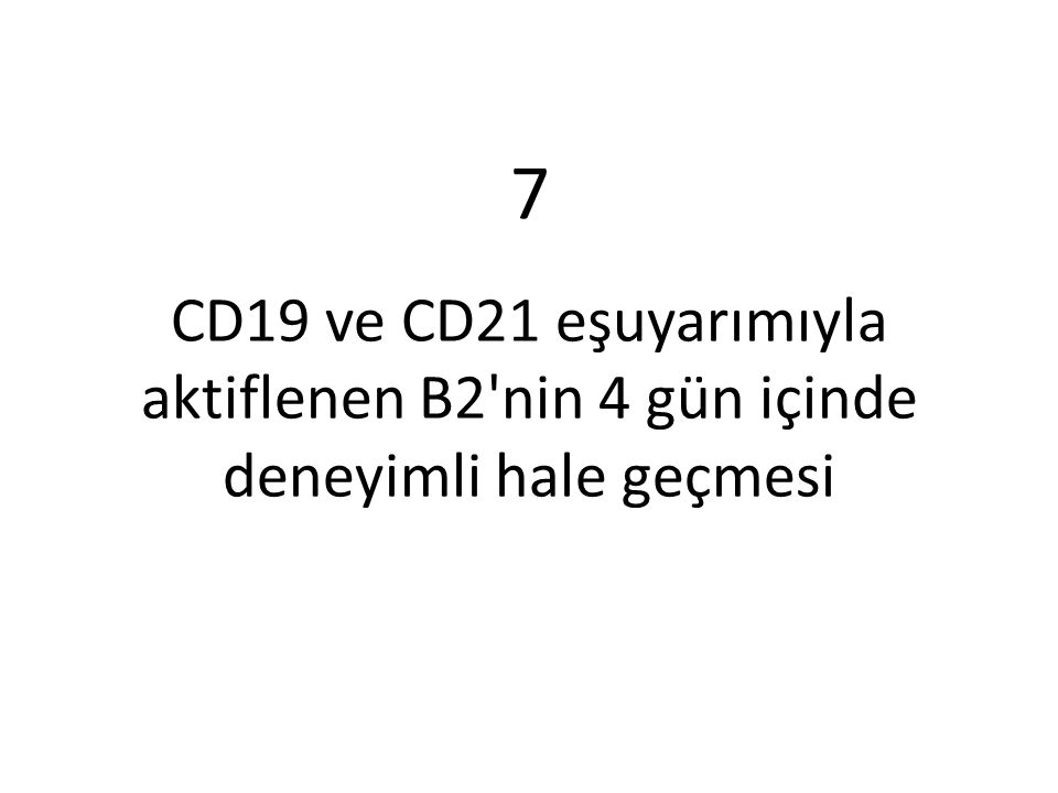 CD19 ve CD21 eşuyarımıyla aktiflenen B2 hücresinin deneyimli hale geçmesi aşağıdaki basamakları tamamlanmasıyla gerçekleşir ①Th2 hücresi aktiflenen bu B2 hücresine yardım verecektir, ancak önce, her iki hücrenin de aynı antijenden etkilendiği kesinleşmelidir.