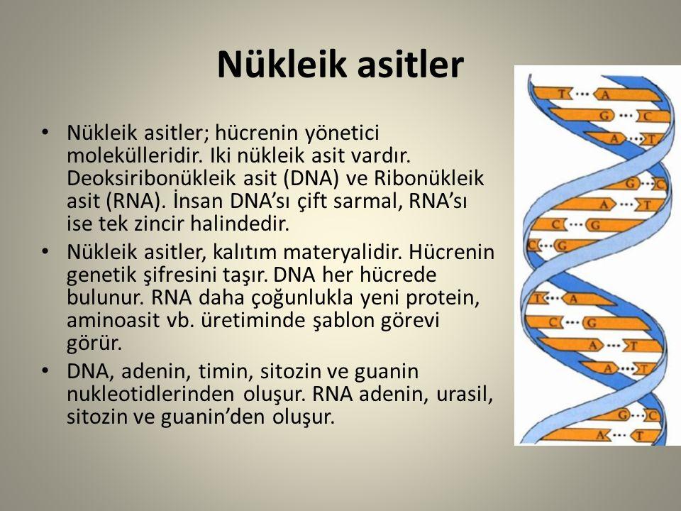 Nükleik asitler Nükleik asitler; hücrenin yönetici molekülleridir. Iki nükleik asit vardır. Deoksiribonükleik asit (DNA) ve Ribonükleik asit (RNA). İn