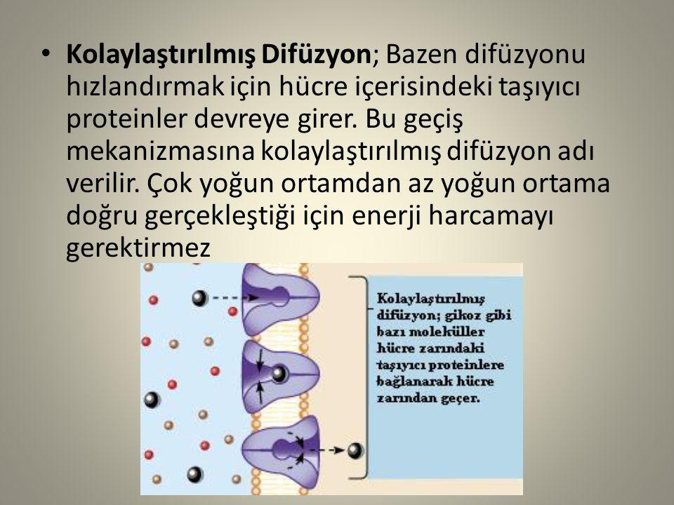 Kolaylaştırılmış Difüzyon; Bazen difüzyonu hızlandırmak için hücre içerisindeki taşıyıcı proteinler devreye girer. Bu geçiş mekanizmasına kolaylaştırı