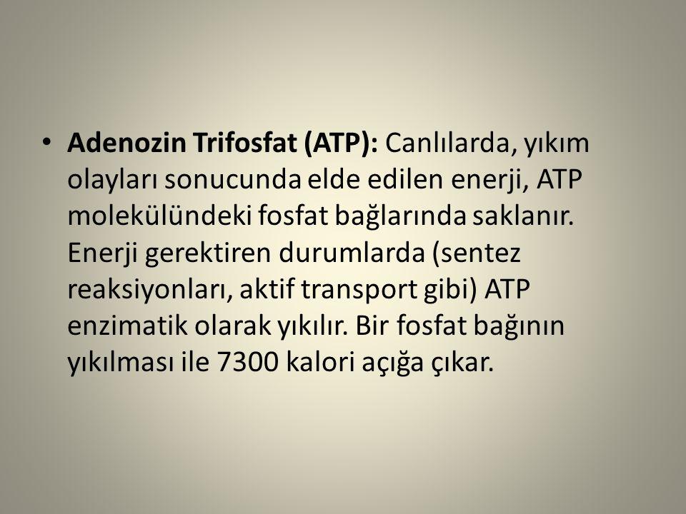 Adenozin Trifosfat (ATP): Canlılarda, yıkım olayları sonucunda elde edilen enerji, ATP molekülündeki fosfat bağlarında saklanır. Enerji gerektiren dur