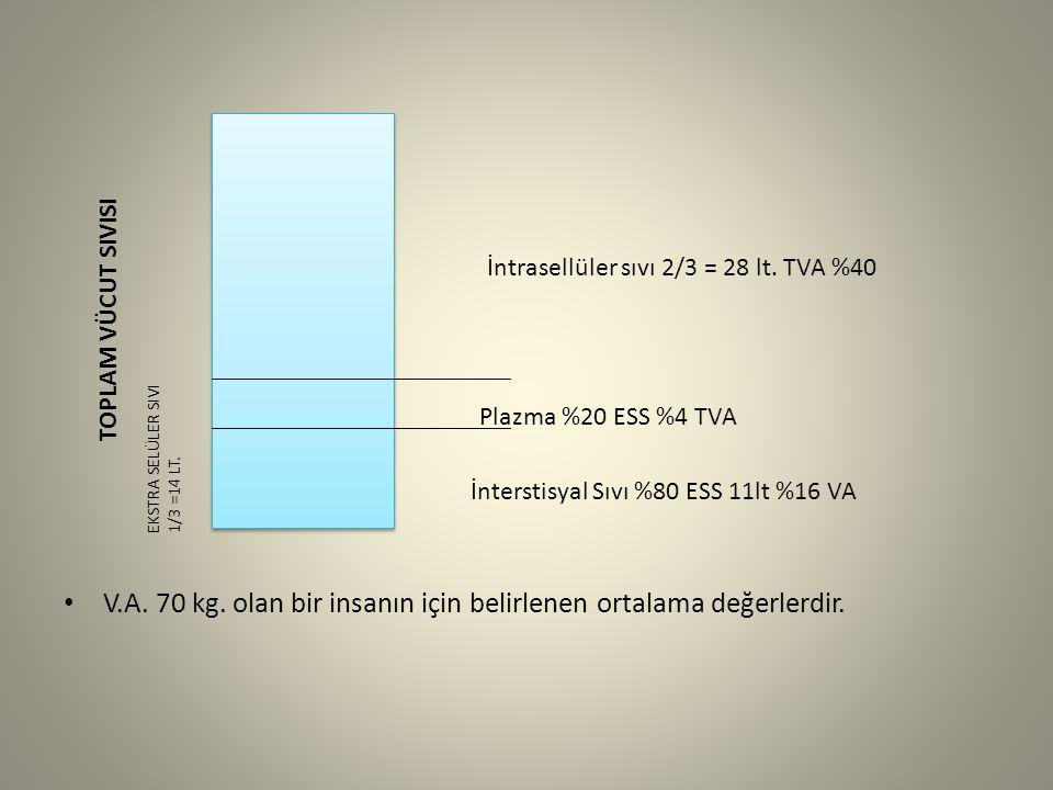 V.A. 70 kg. olan bir insanın için belirlenen ortalama değerlerdir. İntrasellüler sıvı 2/3 = 28 lt. TVA %40 Plazma %20 ESS %4 TVA İnterstisyal Sıvı %80