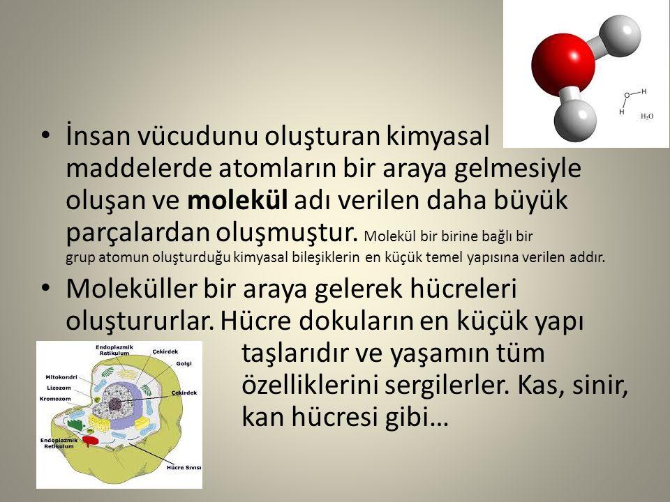 İnsan vücudunu oluşturan kimyasal maddelerde atomların bir araya gelmesiyle oluşan ve molekül adı verilen daha büyük parçalardan oluşmuştur. Molekül b