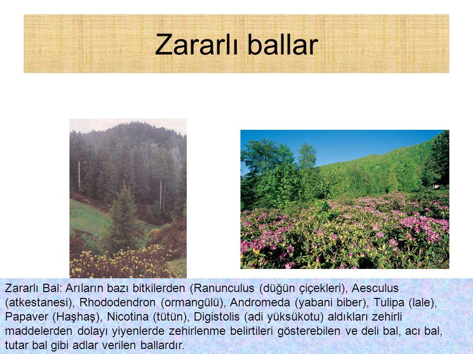 Zararlı ballar Zararlı Bal: Arıların bazı bitkilerden (Ranunculus (düğün çiçekleri), Aesculus (atkestanesi), Rhododendron (ormangülü), Andromeda (yaba