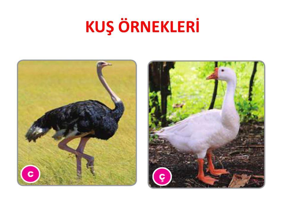 MEMELİLER  Memelilerin Genel Özellikleri 1.Hayvanlar âleminin en organize olmuş ve gelişmiş grubu memelilerdir.