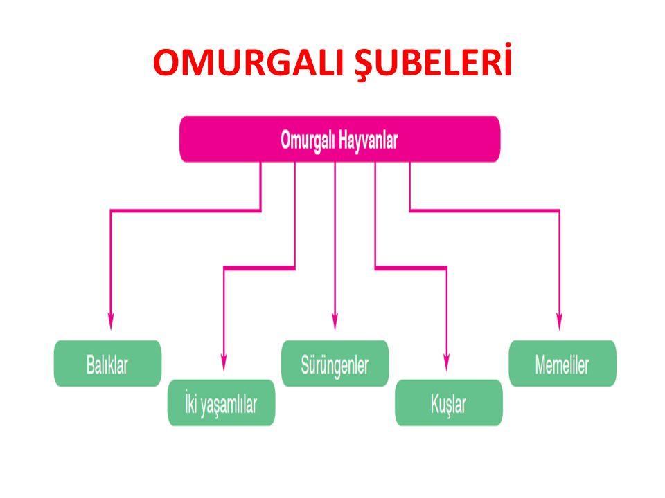 OMURGALI ŞUBELERİ