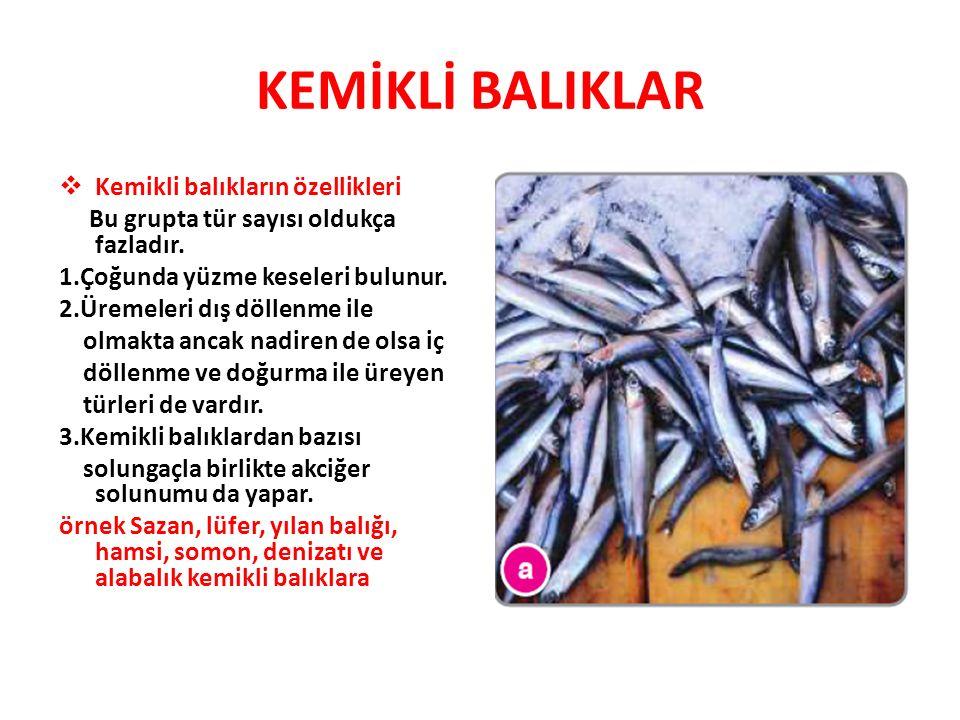KEMİKLİ BALIKLAR  Kemikli balıkların özellikleri Bu grupta tür sayısı oldukça fazladır. 1.Çoğunda yüzme keseleri bulunur. 2.Üremeleri dış döllenme il
