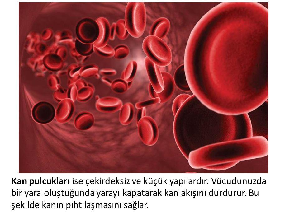 Kan pulcukları ise çekirdeksiz ve küçük yapılardır. Vücudunuzda bir yara oluştuğunda yarayı kapatarak kan akışını durdurur. Bu şekilde kanın pıhtılaşm