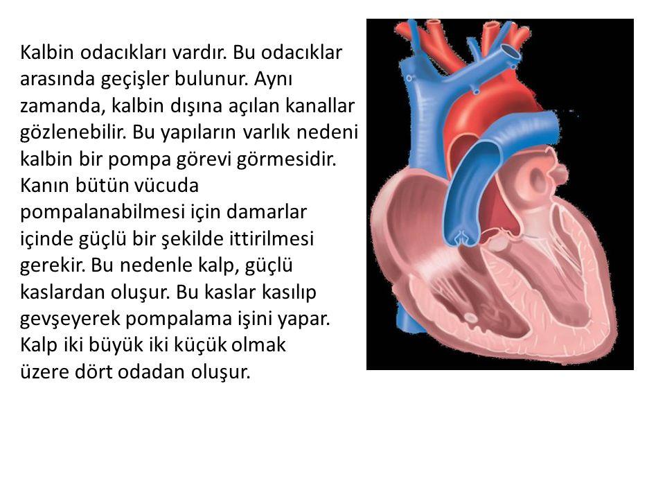 Kalbin odacıkları vardır. Bu odacıklar arasında geçişler bulunur. Aynı zamanda, kalbin dışına açılan kanallar gözlenebilir. Bu yapıların varlık nedeni