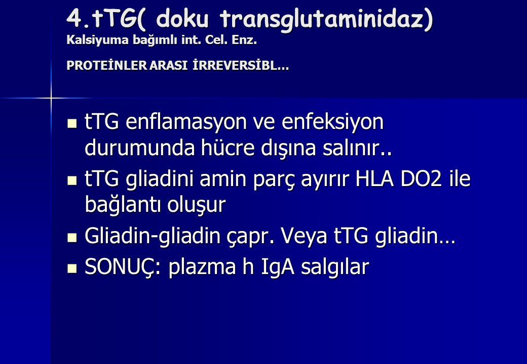 4.tTG( doku transglutaminidaz) Kalsiyuma bağımlı int. Cel. Enz. PROTEİNLER ARASI İRREVERSİBL… tTG enflamasyon ve enfeksiyon durumunda hücre dışına sal