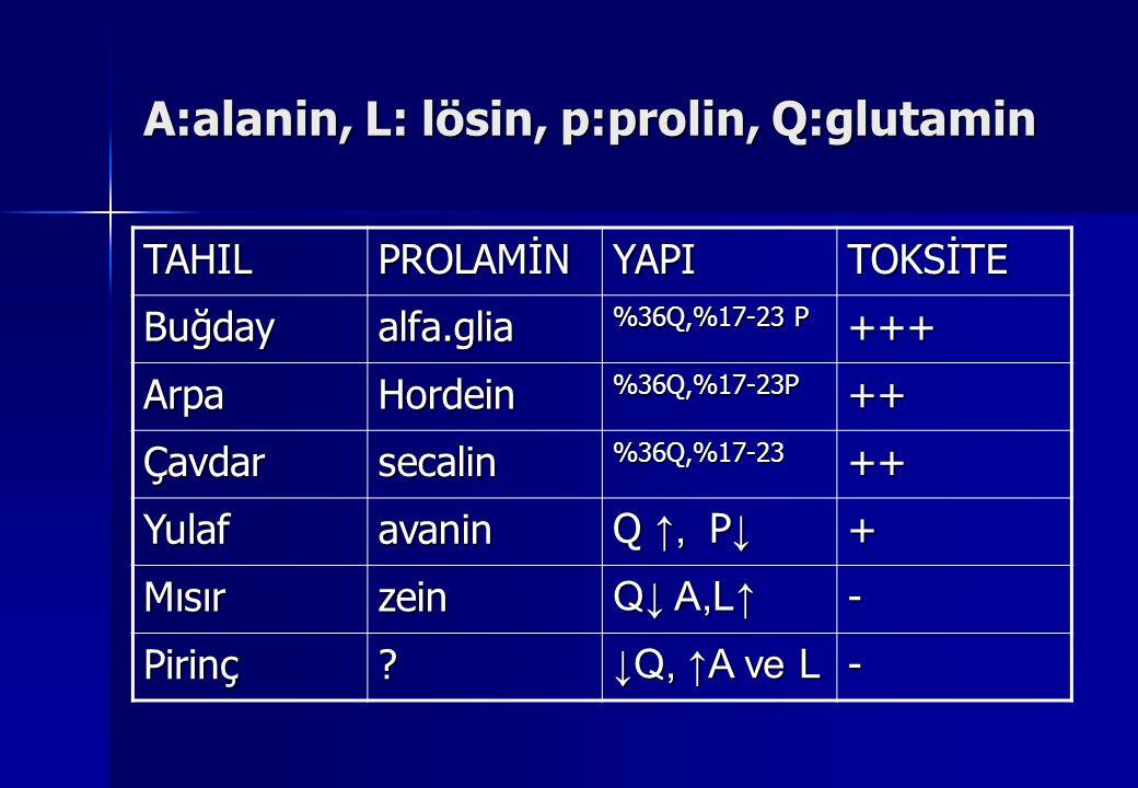 A:alanin, L: lösin, p:prolin, Q:glutamin TAHILPROLAMİNYAPITOKSİTE Buğdayalfa.glia %36Q,%17-23 P +++ ArpaHordein%36Q,%17-23P++ Çavdarsecalin%36Q,%17-23