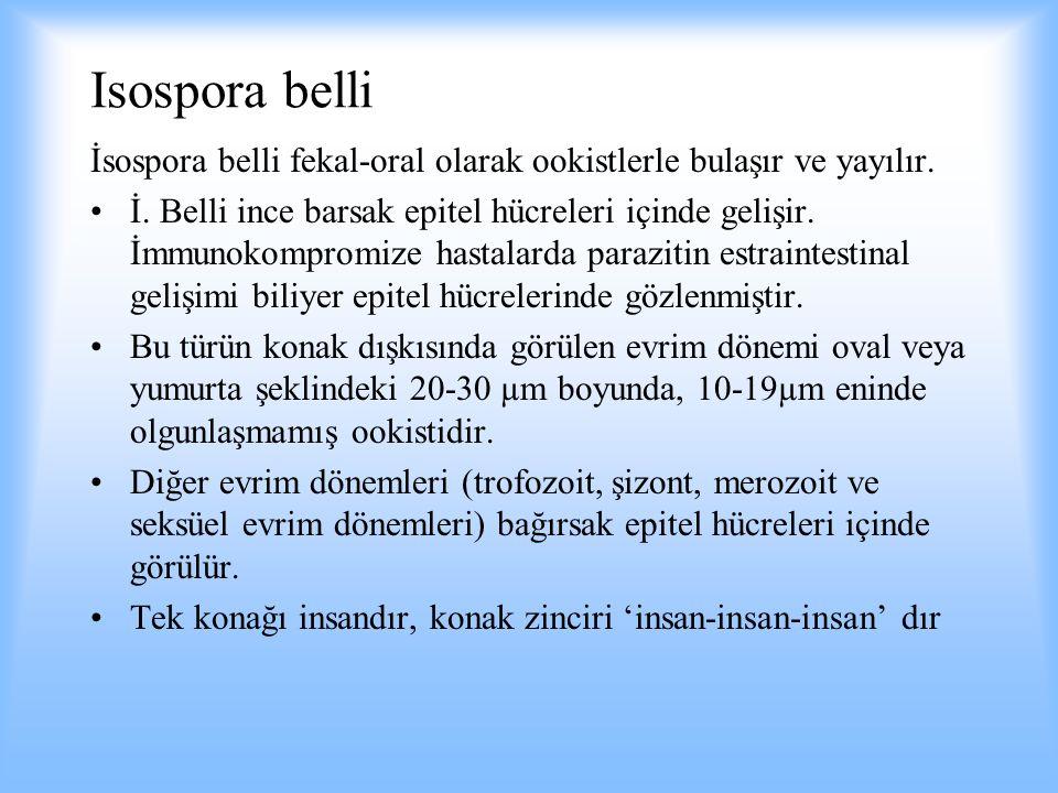 Isospora belli İsospora belli fekal-oral olarak ookistlerle bulaşır ve yayılır. İ. Belli ince barsak epitel hücreleri içinde gelişir. İmmunokompromize