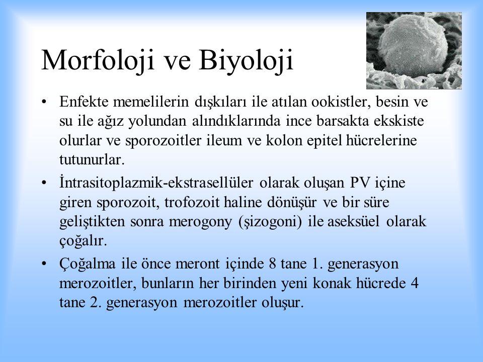 Morfoloji ve Biyoloji 2.
