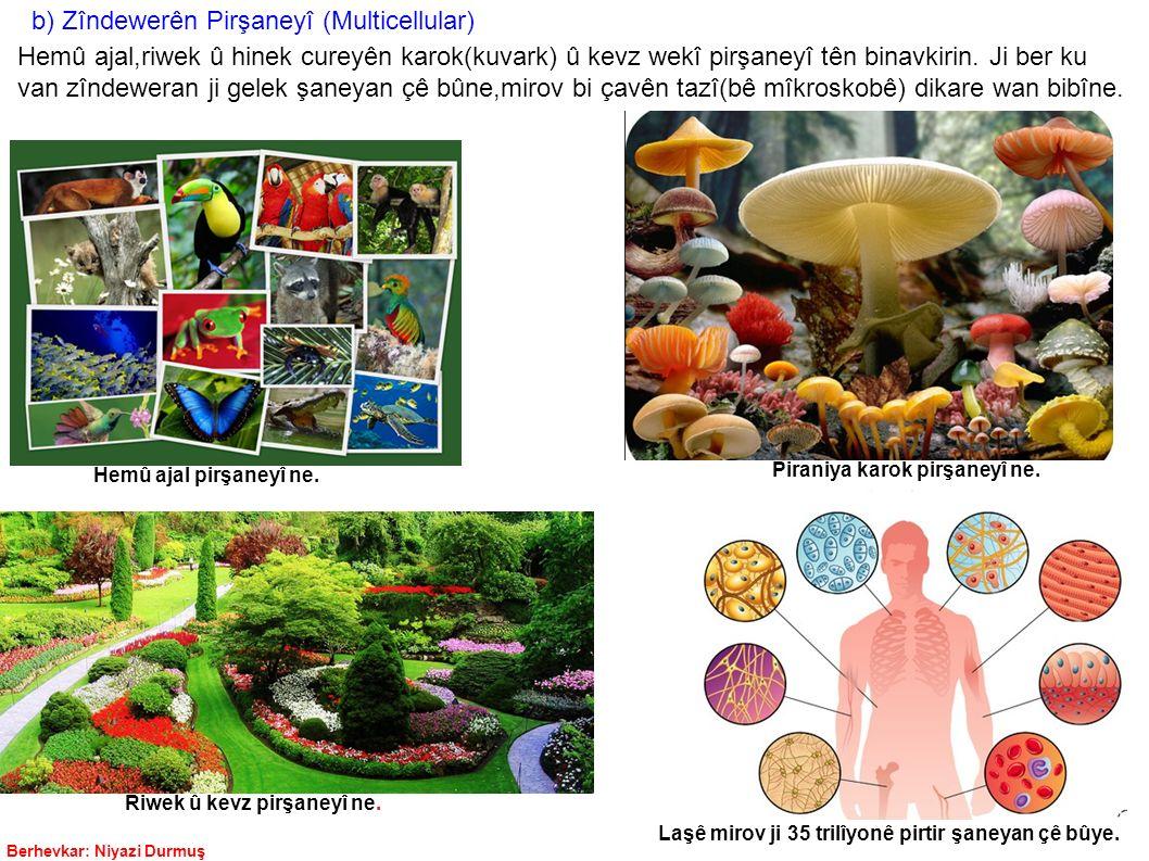 Berhevkar: Niyazi Durmuş b) Zîndewerên Pirşaneyî (Multicellular) Hemû ajal,riwek û hinek cureyên karok(kuvark) û kevz wekî pirşaneyî tên binavkirin. J