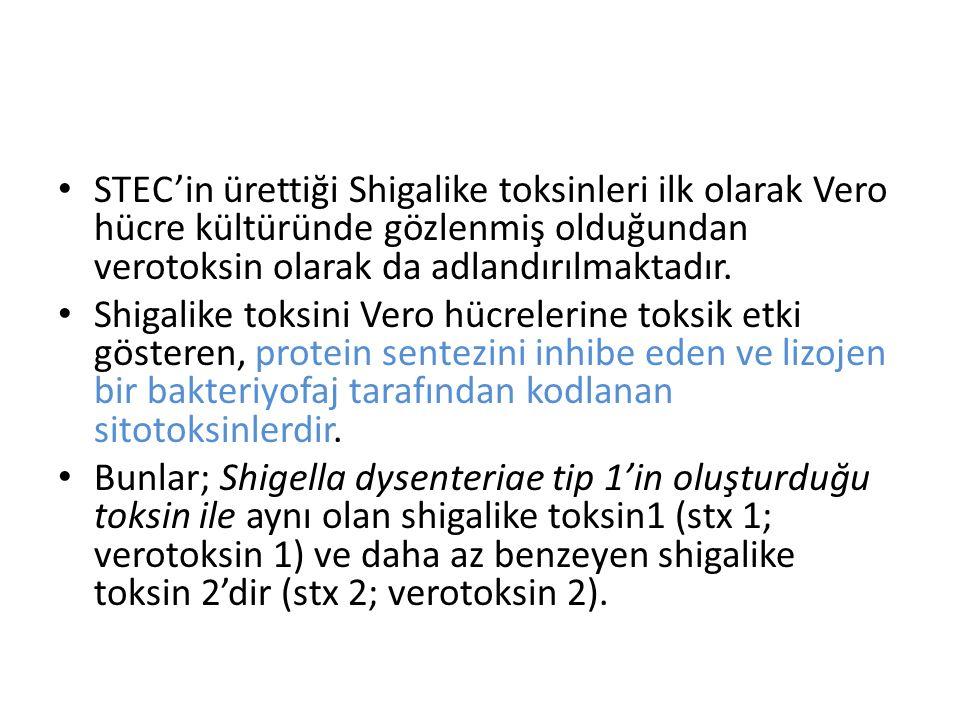 STEC'in ürettiği Shigalike toksinleri ilk olarak Vero hücre kültüründe gözlenmiş olduğundan verotoksin olarak da adlandırılmaktadır. Shigalike toksini