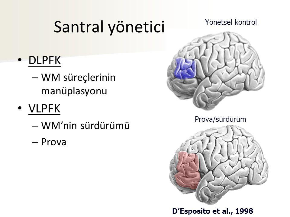 D'Esposito et al., 1998 Yönetsel kontrol Prova/sürdürüm Santral yönetici DLPFK – WM süreçlerinin manüplasyonu VLPFK – WM'nin sürdürümü – Prova
