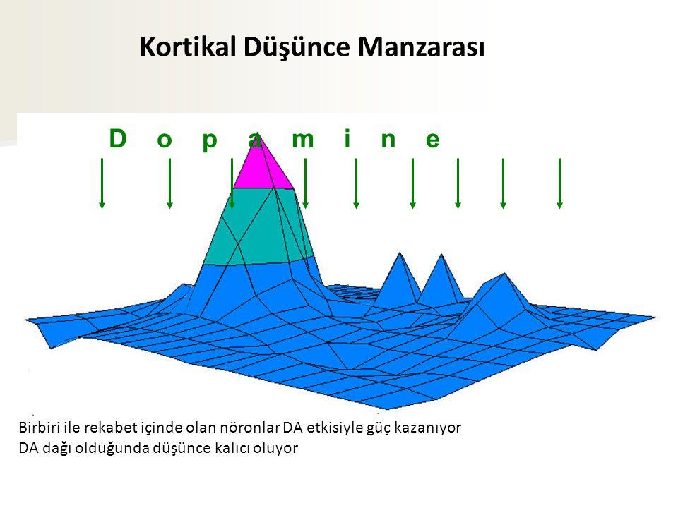 D o p a m i n e Kortikal Düşünce Manzarası Birbiri ile rekabet içinde olan nöronlar DA etkisiyle güç kazanıyor DA dağı olduğunda düşünce kalıcı oluyor