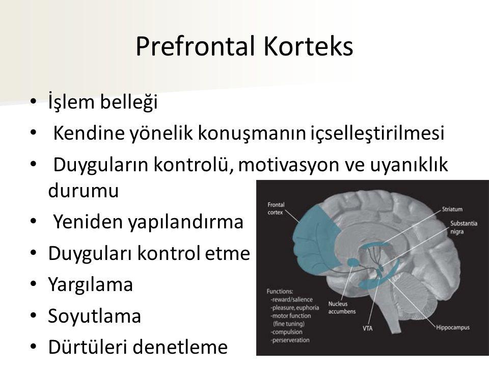 Prefrontal Korteks İşlem belleği Kendine yönelik konuşmanın içselleştirilmesi Duyguların kontrolü, motivasyon ve uyanıklık durumu Yeniden yapılandırma Duyguları kontrol etme Yargılama Soyutlama Dürtüleri denetleme