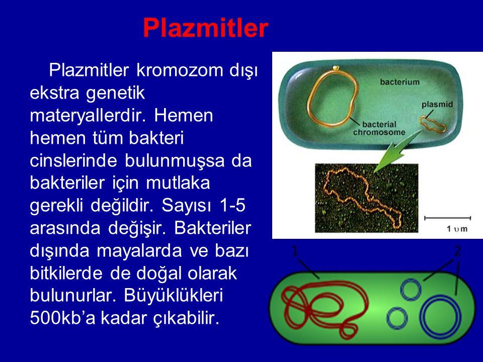 Plazmitler Plazmitler kromozom dışı ekstra genetik materyallerdir. Hemen hemen tüm bakteri cinslerinde bulunmuşsa da bakteriler için mutlaka gerekli d