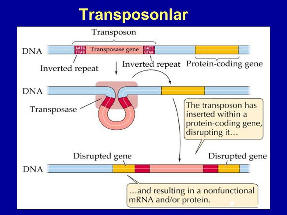 Transposonlar