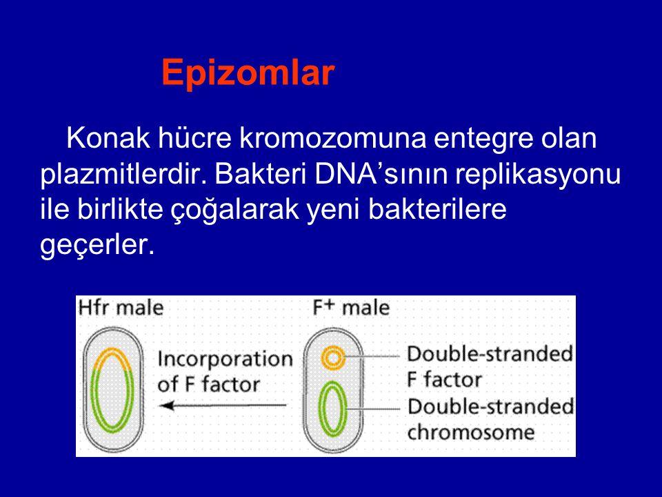 Epizomlar Konak hücre kromozomuna entegre olan plazmitlerdir. Bakteri DNA'sının replikasyonu ile birlikte çoğalarak yeni bakterilere geçerler.