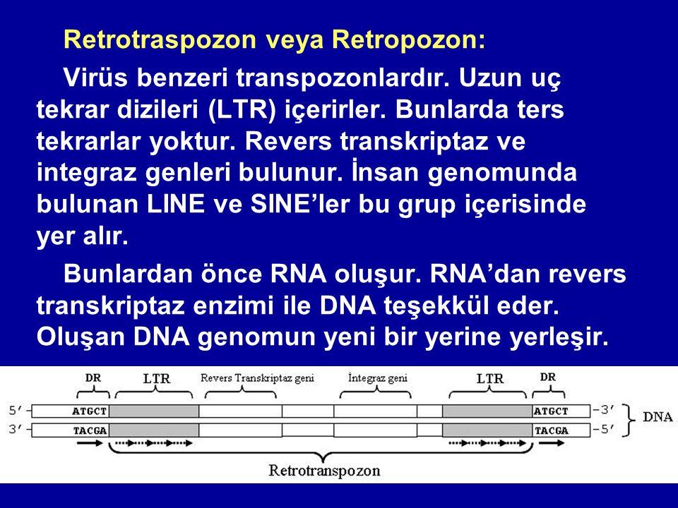 Retrotraspozon veya Retropozon: Virüs benzeri transpozonlardır. Uzun uç tekrar dizileri (LTR) içerirler. Bunlarda ters tekrarlar yoktur. Revers transk