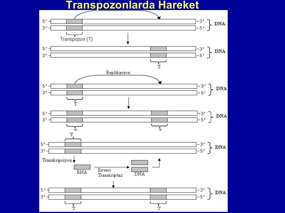Transpozonlarda Hareket
