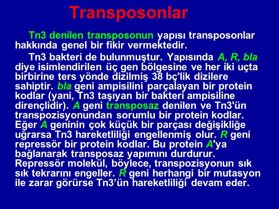 Transposonlar Tn3 denilen transposonun yapısı transposonlar hakkında genel bir fikir vermektedir. Tn3 bakteri de bulunmuştur. Yapısında A, R, bla diye