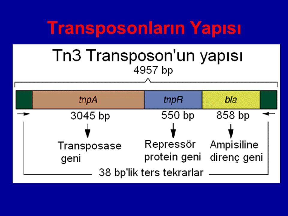Transposonların Yapısı