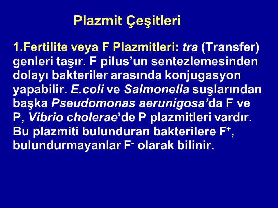 Plazmit Çeşitleri 1.Fertilite veya F Plazmitleri: tra (Transfer) genleri taşır. F pilus'un sentezlemesinden dolayı bakteriler arasında konjugasyon yap