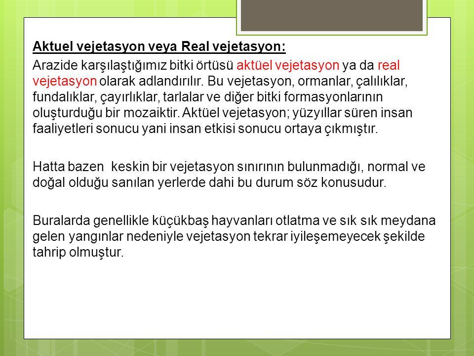 Aktuel vejetasyon veya Real vejetasyon: Arazide karşılaştığımız bitki örtüsü aktüel vejetasyon ya da real vejetasyon olarak adlandırılır. Bu vejetasyo