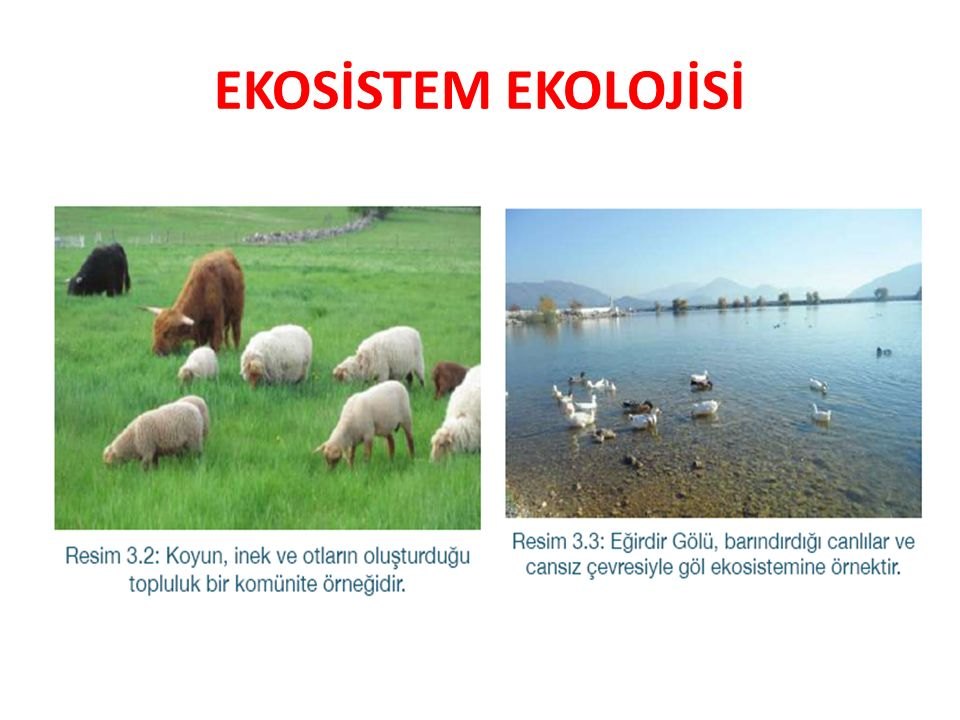 EKOSİSTEM EKOLOJİSİ