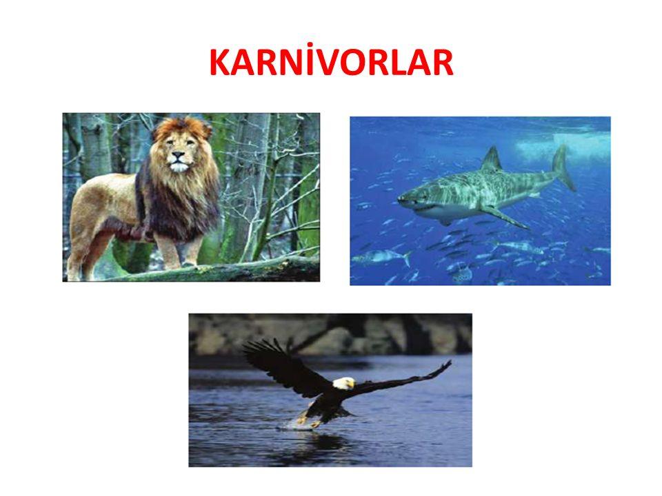 KARNİVORLAR