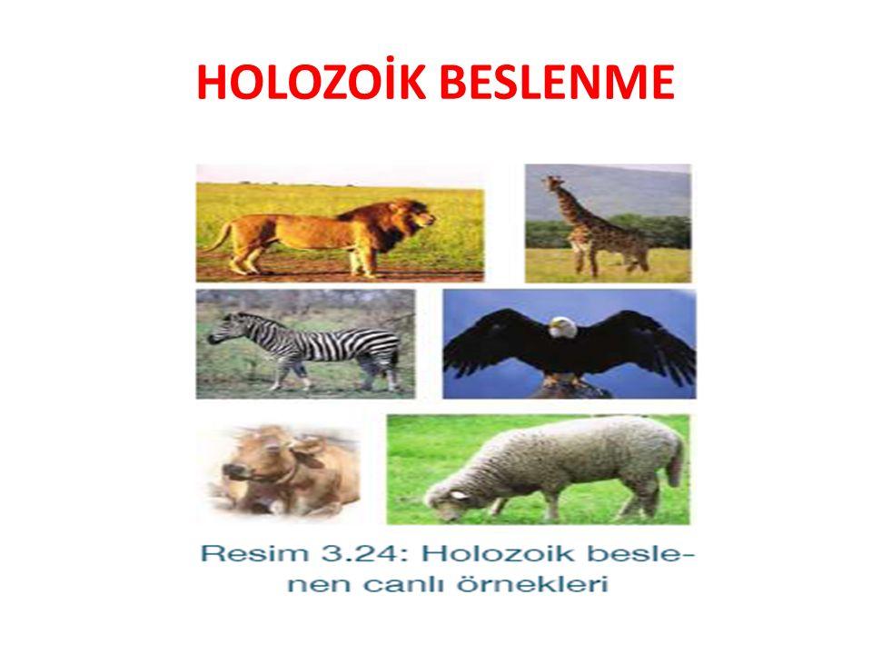 HOLOZOİK BESLENME