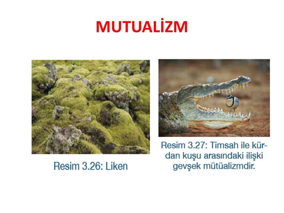 MUTUALİZM