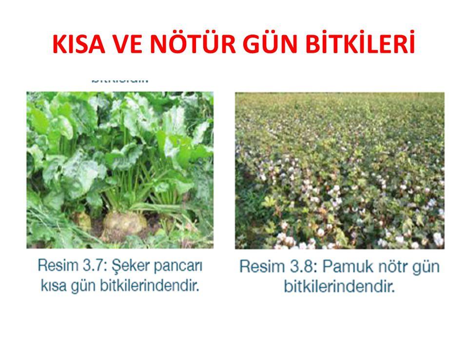 SU İLE İLGİLİ RESİMLER