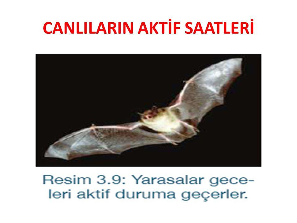 CANLILARIN AKTİF SAATLERİ