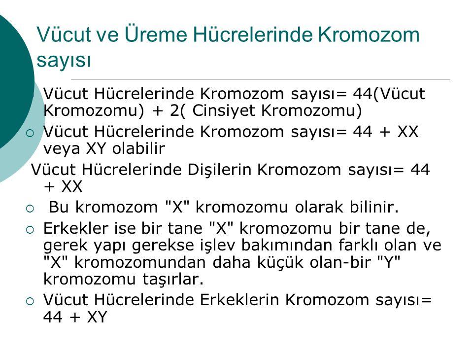 Vücut ve Üreme Hücrelerinde Kromozom sayısı  Vücut Hücrelerinde Kromozom sayısı= 44(Vücut Kromozomu) + 2( Cinsiyet Kromozomu)  Vücut Hücrelerinde Kromozom sayısı= 44 + XX veya XY olabilir Vücut Hücrelerinde Dişilerin Kromozom sayısı= 44 + XX  Bu kromozom X kromozomu olarak bilinir.