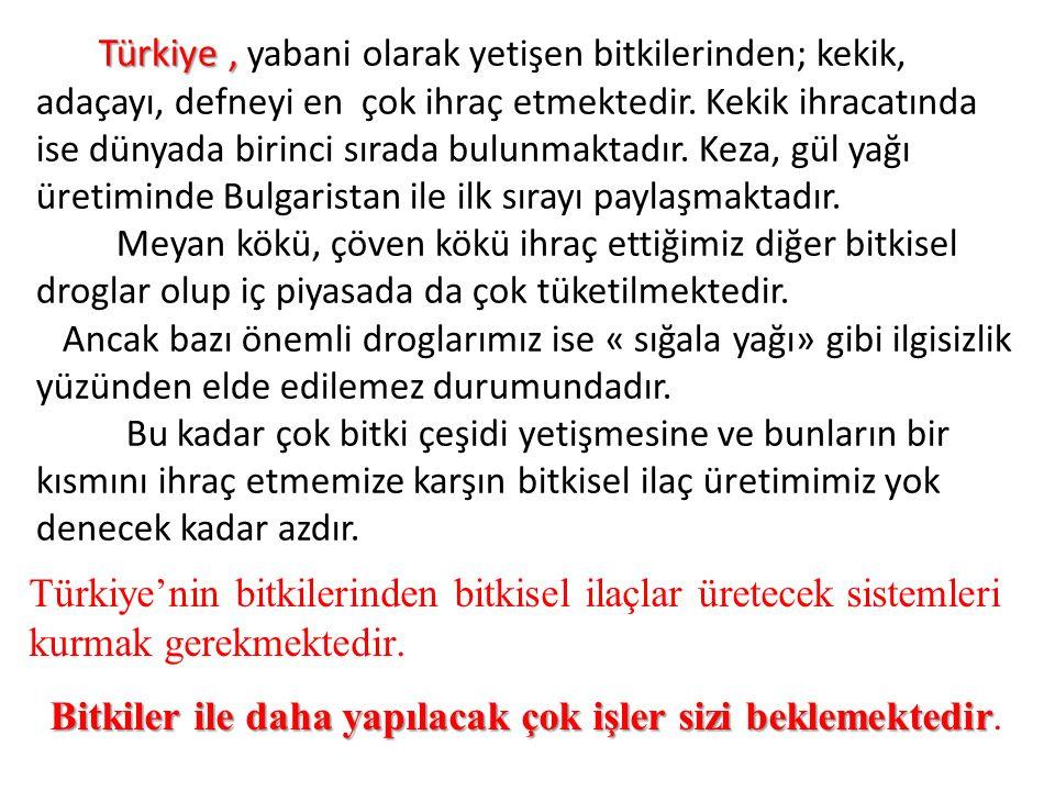 Türkiye, Türkiye, yabani olarak yetişen bitkilerinden; kekik, adaçayı, defneyi en çok ihraç etmektedir.