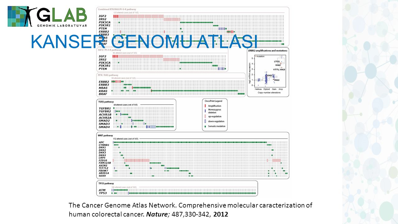 The Cancer Genome Atlas Network. Comprehensive molecular caracterization of human colorectal cancer. Nature; 487,330-342, 2012 KANSER GENOMU ATLASI