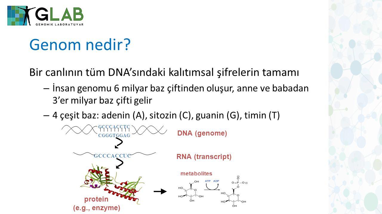 Genom nedir? Bir canlının tüm DNA'sındaki kalıtımsal şifrelerin tamamı – İnsan genomu 6 milyar baz çiftinden oluşur, anne ve babadan 3'er milyar baz ç