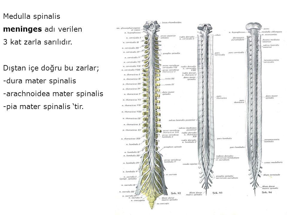 Medulla spinalis meninges adı verilen 3 kat zarla sarılıdır. Dıştan içe doğru bu zarlar; -dura mater spinalis -arachnoidea mater spinalis -pia mater s