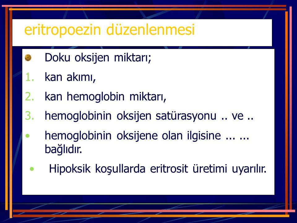 eritropoezin düzenlenmesi Doku oksijen miktarı; 1.kan akımı, 2.kan hemoglobin miktarı, 3.hemoglobinin oksijen satürasyonu.. ve.. hemoglobinin oksijene