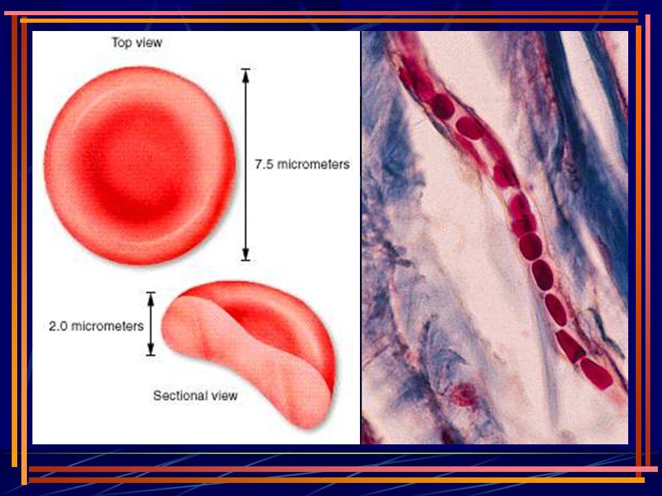 eritropoezin düzenlenmesi Doku oksijen miktarı; 1.kan akımı, 2.kan hemoglobin miktarı, 3.hemoglobinin oksijen satürasyonu..