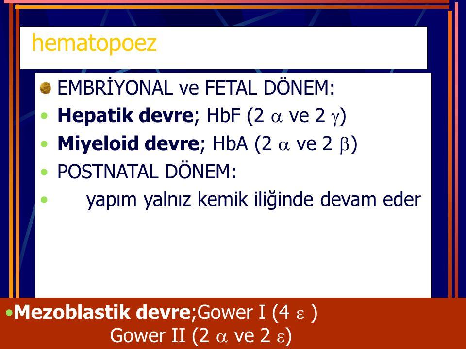 hematopoez EMBRİYONAL ve FETAL DÖNEM: Hepatik devre; HbF (2  ve 2  ) Miyeloid devre; HbA (2  ve 2  ) POSTNATAL DÖNEM: yapım yalnız kemik iliğinde