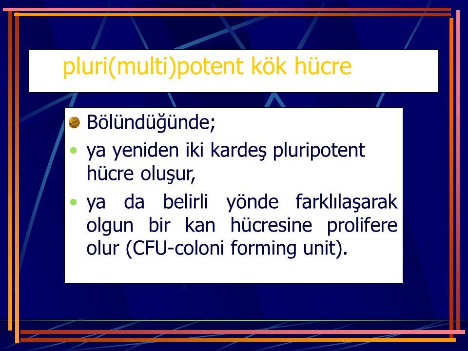 pluri(multi)potent kök hücre Bölündüğünde; ya yeniden iki kardeş pluripotent hücre oluşur, ya da belirli yönde farklılaşarak olgun bir kan hücresine p