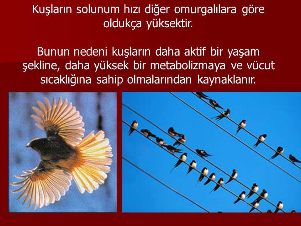Kuşların solunum hızı diğer omurgalılara göre oldukça yüksektir. Bunun nedeni kuşların daha aktif bir yaşam şekline, daha yüksek bir metabolizmaya ve