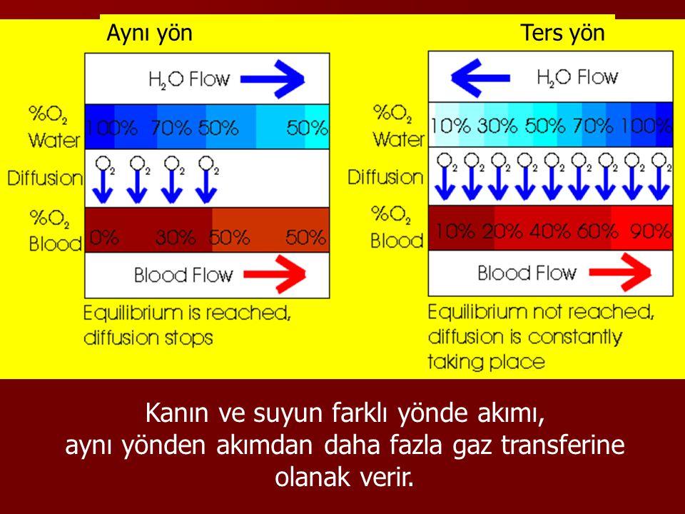 Aynı yön Ters yön Kanın ve suyun farklı yönde akımı, aynı yönden akımdan daha fazla gaz transferine olanak verir.