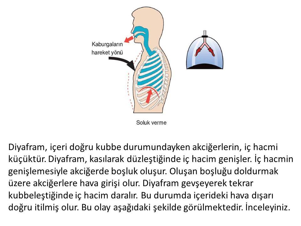 Diyafram, içeri doğru kubbe durumundayken akciğerlerin, iç hacmi küçüktür. Diyafram, kasılarak düzleştiğinde iç hacim genişler. İç hacmin genişlemesiy