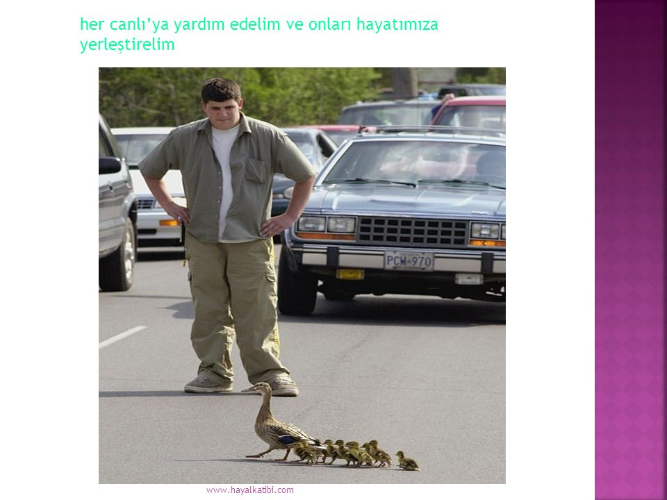 her canlı'ya yardım edelim ve onları hayatımıza yerleştirelim www.hayalkatibi.com
