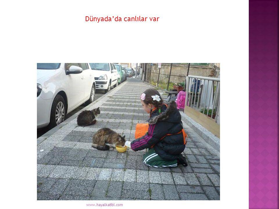 Dünyada'da canlılar var www.hayalkatibi.com
